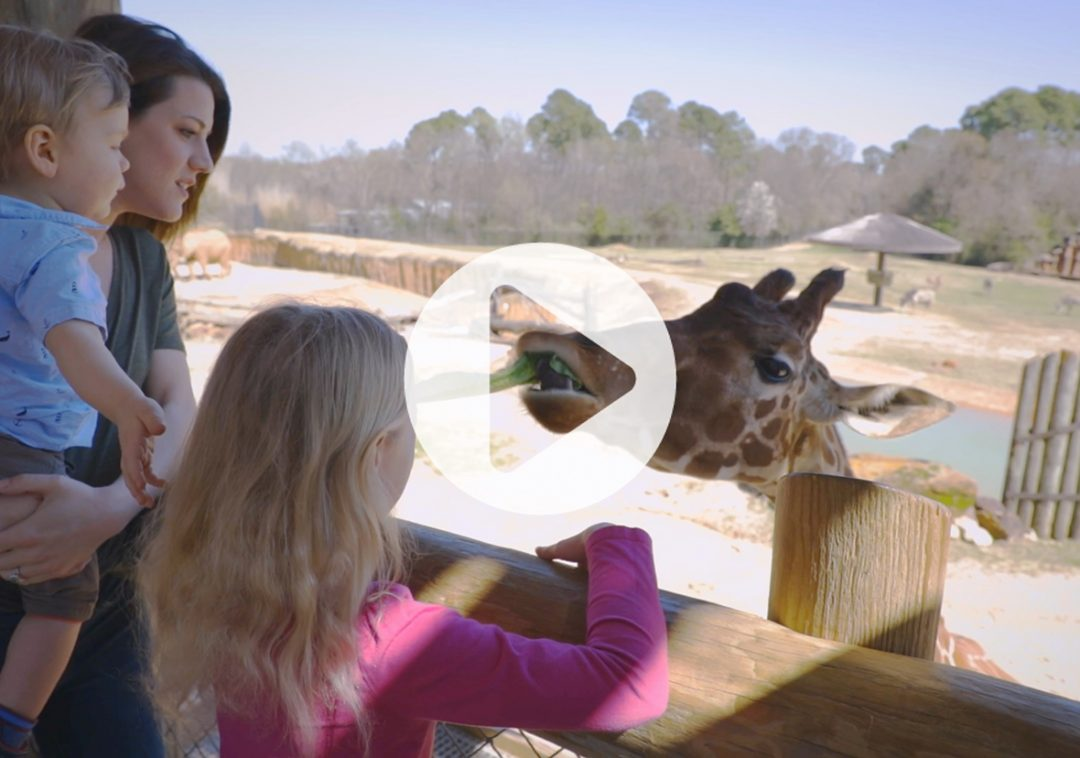Caldwell Zoo Hunger Commercial